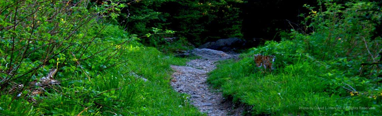 """Path"" by David Harkins"
